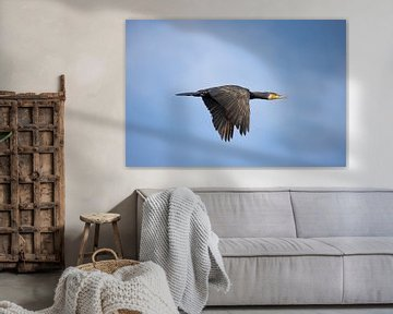 Kormoran im Flug, Phalacrocorax carbo von Gert Hilbink