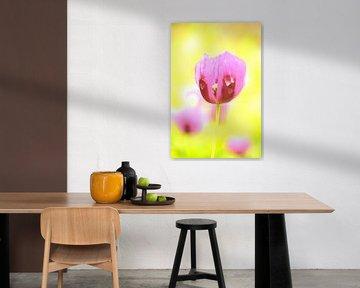 Lila und gelb von Arno-Jan Boere