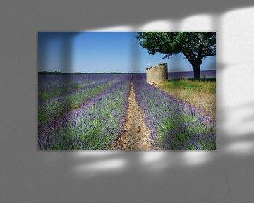 Lavendel Haute Provence Frankreich von Mario Brussé Fotografie