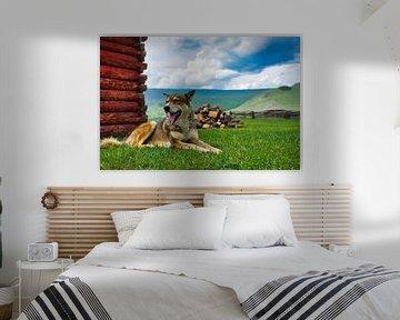 Dog van Bart Nikkels