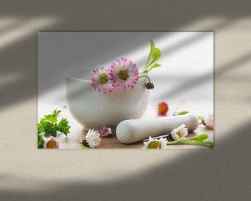 Wilde kruiden keuken Daisy