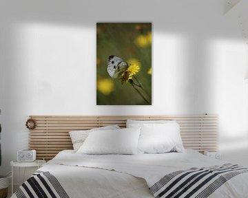 Witje vlinders van Shirley Douwstra