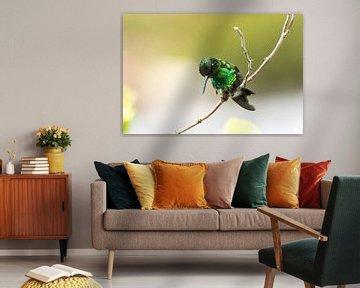 Blue-tailed Emerald! van Robert Kok