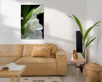 Zwischen Knospe und Blüte von Gerard de Zwaan
