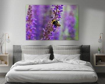 Hommel op paarse Salvia bloemen