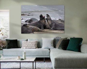 Zee-olifanten von Fred van den Brink