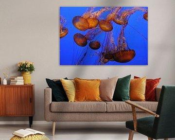 Vissen von Fred van den Brink