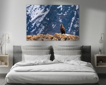 Weißkopfseeadler mit den Bergen im Hintergrund von Rob Coorens