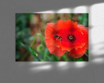 Bij in bloem von Fred van den Brink