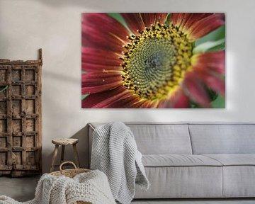 rote Sonnenblume von Remko van der Hoek- Zijdemans