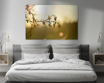 elzenkatjes in het ochtendlicht van Tania Perneel