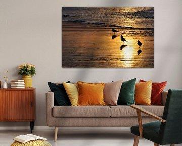 Vogels in de branding von Fred van den Brink