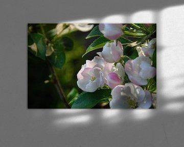 Bloemen von Fred van den Brink