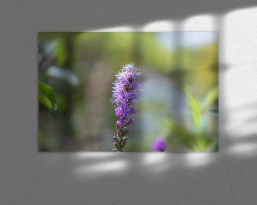 paarse lampenpoetser van Tania Perneel