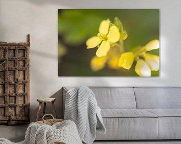 gelbe Mini-Blume von Tania Perneel