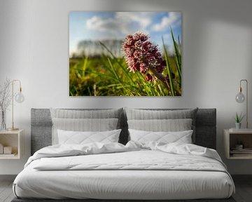 Blume in der Abendsonne von Stijn Cleynhens
