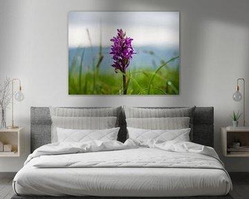 Wilde Orchidee von Stijn Cleynhens