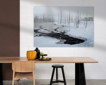 Besneeuwde dennenbomen in Lapland, Finland van AGAMI Photo Agency