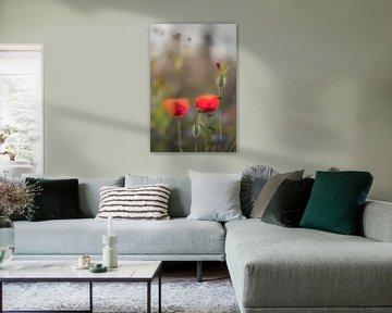 Prachtige klaprozen in bloemenveld van Moetwil en van Dijk - Fotografie