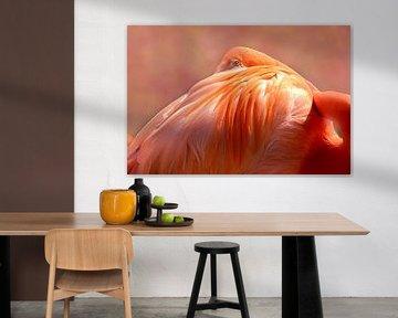 Flamingo von D Meijer