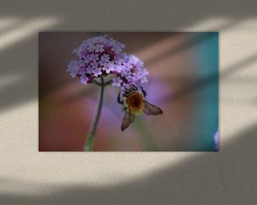 Biene mit Eisen hart von Shirley Douwstra