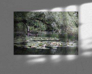 Blick durch den Dünensee Bakkum von Shirley Douwstra