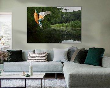 Eisvogel im Flug von Jeroen Stel