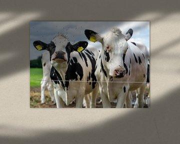 Zwei Kühe hinter einem Draht. von René van der A