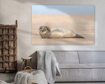 Seehund schaut über den Strand. von Jeroen Stel