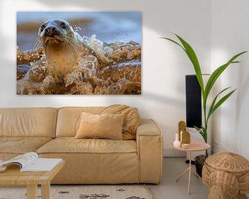 Graues Seehund bricht durch die Brandung von Jeroen Stel