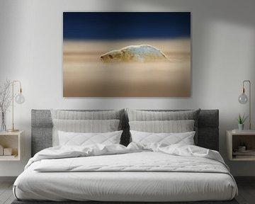 Junge Graue Robbe Welpe am Strand von Jeroen Stel