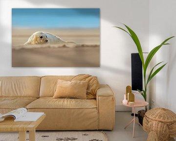 Junge Kegelrobbe am Strand von Jeroen Stel
