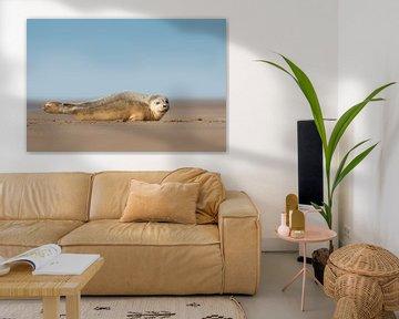 Junge Seehunde am Strand von Jeroen Stel