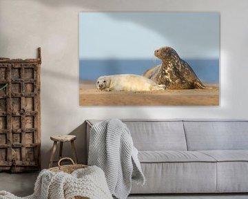 Mutter und Welpe Graues Seehund am Strand von Jeroen Stel