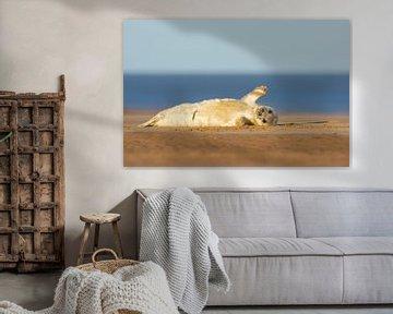 Der junge Seehund schwingt vom Strand aus. von Jeroen Stel