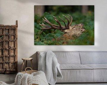 Bronze brennender Rotwild in Waldlandschaft mit Farnen von Jeroen Stel
