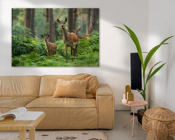 Rothirsch mit Jungtieren in Waldlandschaft mit Farnen von Jeroen Stel