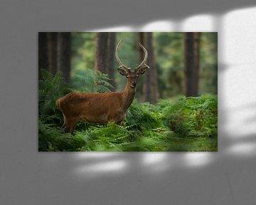 Bronze Rotwildstürmer in Waldlandschaft mit Farnen von Jeroen Stel