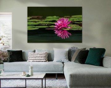 Traumhaft schöne Seerose - im Wasser gespiegelt von Ursula Di Chito