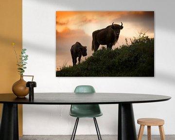 Bison (Europäischer Bison) in der Kraansvlak im Nationalpark Süd-Kennemerland von Jeroen Stel