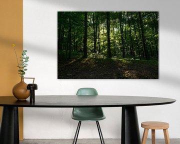 lumières de forêt sur Joerg Keller