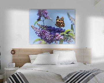 Distelfalter auf Schmetterlingsbusch