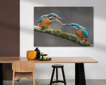 Eisvogel-Fischübertragung, fotografiert im Wurf. von Jeroen Stel