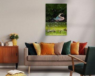 Eisvogel fliegt mit Beute auf von Jeroen Stel