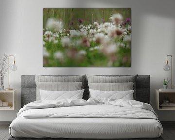 Holland's Blumenfeld von Paul Franke