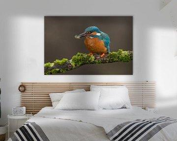 Eisvogel mit Beute auf moosigem Ast von Jeroen Stel