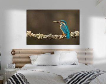 Eisvogel Imet Beute auf moosigem Ast von Jeroen Stel