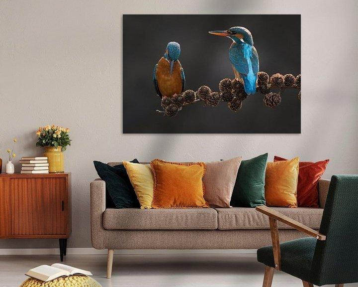 Beispiel: Paar Eisvögel auf Fichtenzweig im Wurf von Jeroen Stel