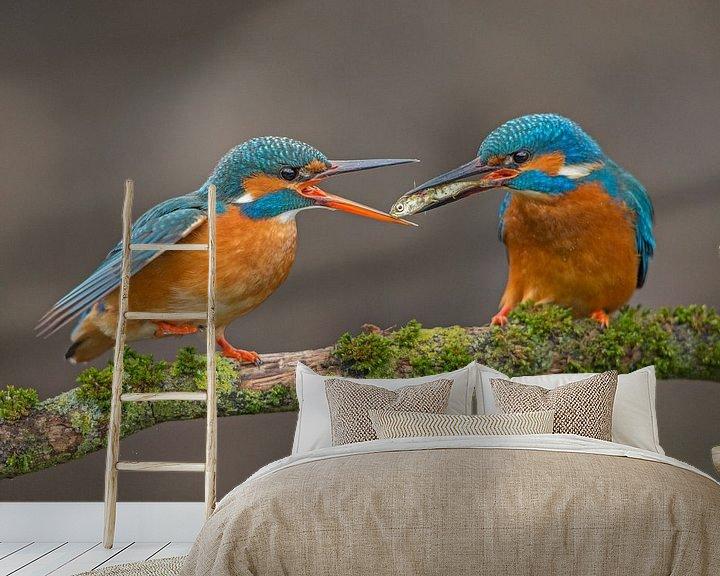 Beispiel fototapete: Fischübertragung Eisvögel im Wurf von Jeroen Stel