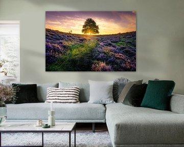 Einsamer Baum auf der Posbank von Martijn van der Nat